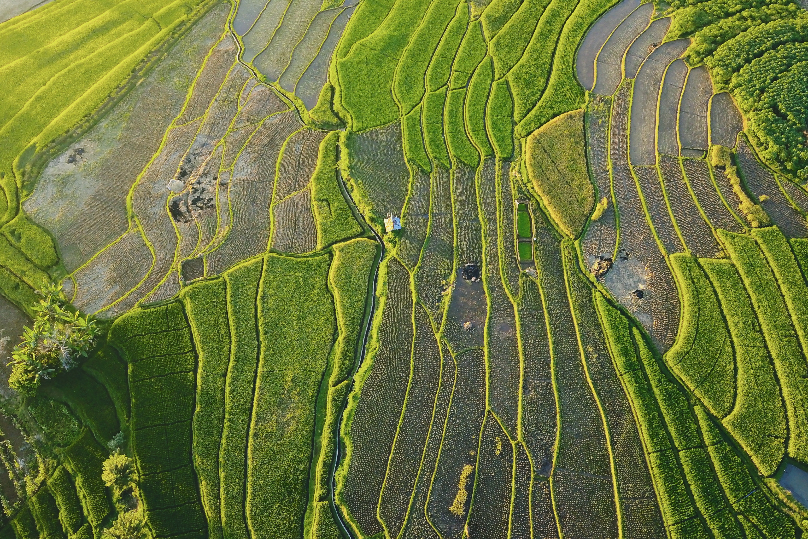 Aerial photograph of cropland in Asia
